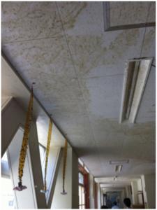 小学校1階の廊下。天井近くまで津波の水が押し寄せたため、土が一面にこびりついている。ハエ取り紙に無数のハエが捕獲されている。